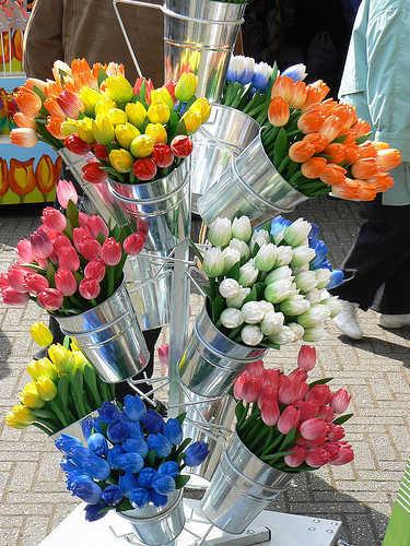 Trong công viên bán nhiều giống cây hoa tuylip và các loại hoa. Ảnh:Natali.