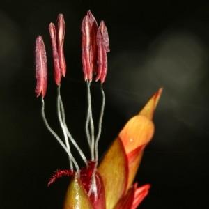 Hoa tre lồ ô - Ảnh: Hào Quang