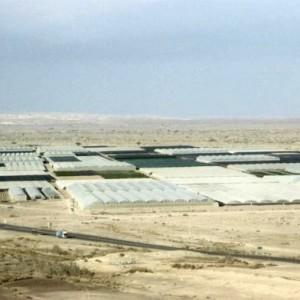 Trang trại tại sa mạc Arava