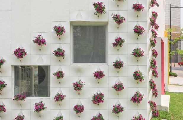 Trồng vườn hoa trên tường nhà - vuon hoa tren tuong nha6