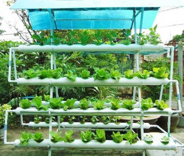Cách trồng rau không cần đất - cach trong rau khong can dat