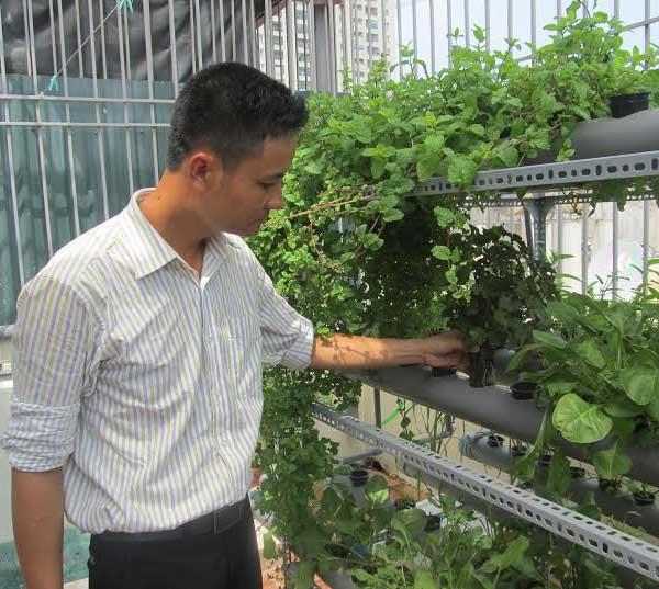 Cách trồng rau không cần đất - cach trong rau khong can dat1