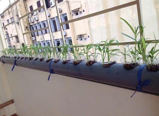 Vườn rau với không gian tiết kiệm.