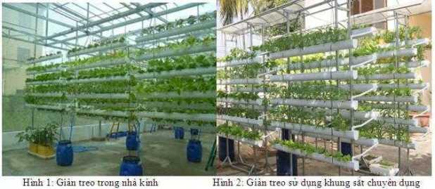 Hình ảnh: 02 mô hình trồng rau sạch trên giá thể trong nhà kính và sử dụng khung sắt chuyên dụng