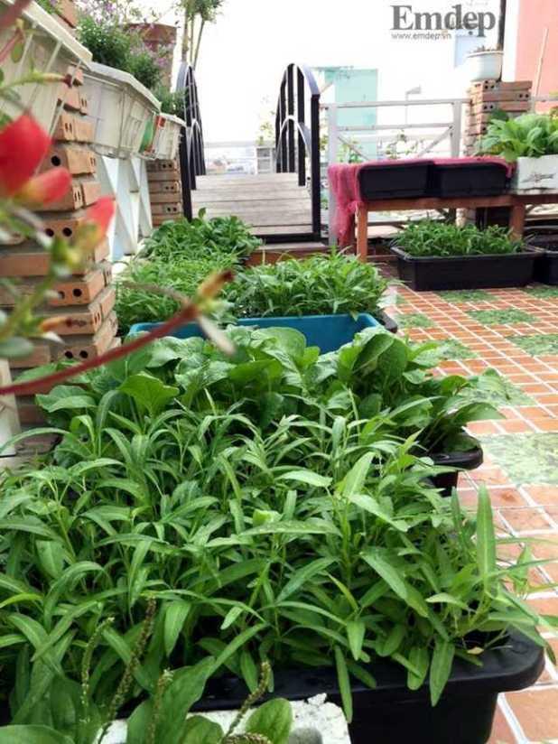 Ngoài các loại cây ăn quả, rau ăn trái, chị Trang còn trồng các loại rau ăn theo mùa.