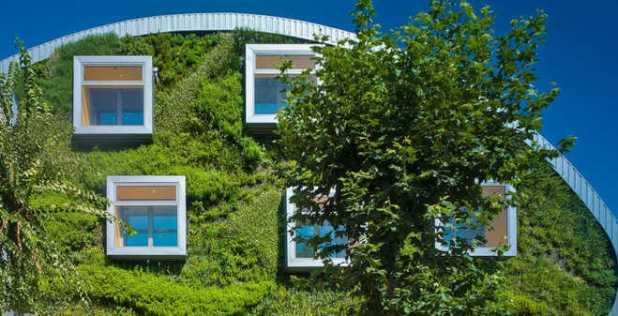 Mặt trớc nhà là bức tường xanh.