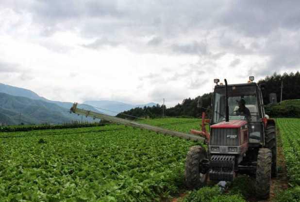 Một góc cánh đồng trồng rau tại Kawakami