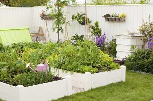 """Ngay cả vườn rau cũng nên có """"phong cách"""" riêng như vườn rau này: tông trắng làm chủ đạo ăn khớp với sắc xanh tươi mát."""