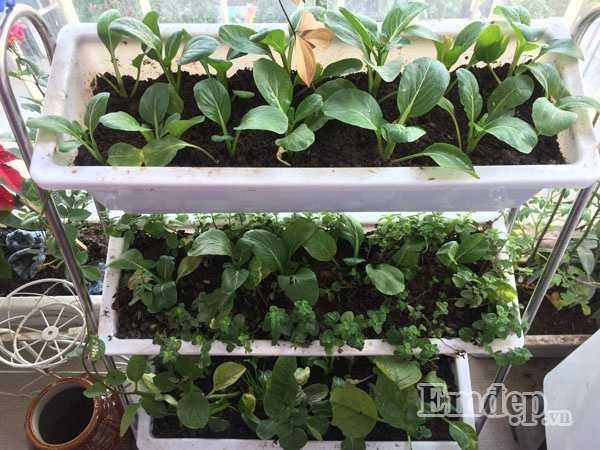 Vì diện tích ban công nhỏ, nên chị Linh chọn cách xếp tầng những chậu rau để tiết kiệm diện tích.