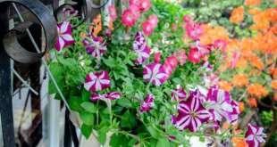 Chậu hoa treo trẽn vách ngập tràn sự vui tươi