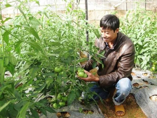 Chân dung nông gia Tô Quang Dũng. Ảnh: TS