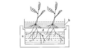 Hình 2.1. Sơ đồ mặt cắt ngang của hệ thống trồng ngập nước Gericke