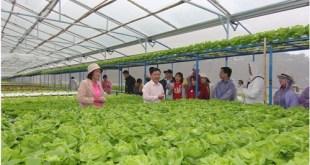 Doanh nghiệp tham quan trang trại của hộ nông dân VietGap tại Đà Lạt.