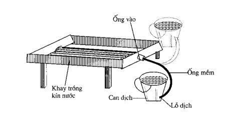 Hình 3.7: tưới ngầm cho khay trồng rộng