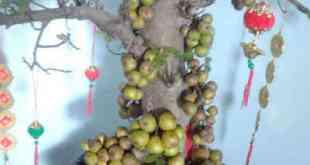 Nắm bắt được điều kiện sinh trưởng rất có lợi cho kỹ thuật trồng cây và chăm sóc cây cảnh bonsai. Ảnh minh họa