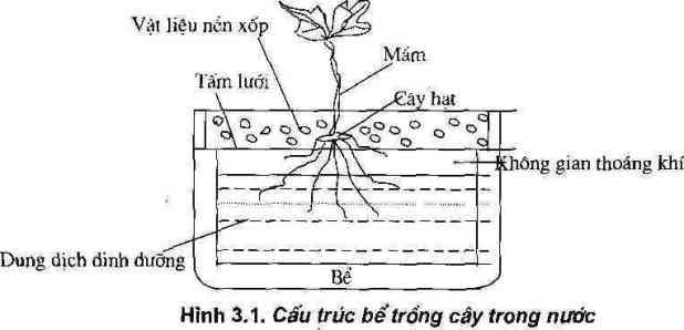 Cấu trúc bể trồng cây trong nước