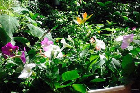 Nhiều loài hoa nở rộ cùng nhau