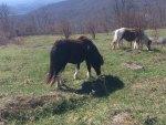 Wild Ponies of Grayson Highlands