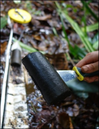 Sampling peat in the swamps of the Congo Basin