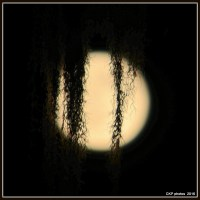 Ode to Moonlight/Poetry/Photography