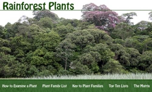Rainforest_Plants_Banner