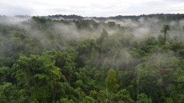 Papua New Guinea forests are globally important centers of biodiversity.