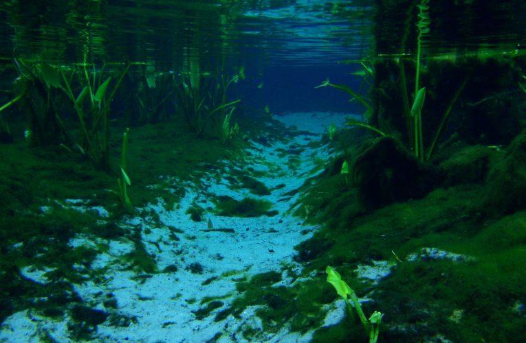Natural aquatic biotopes and plants