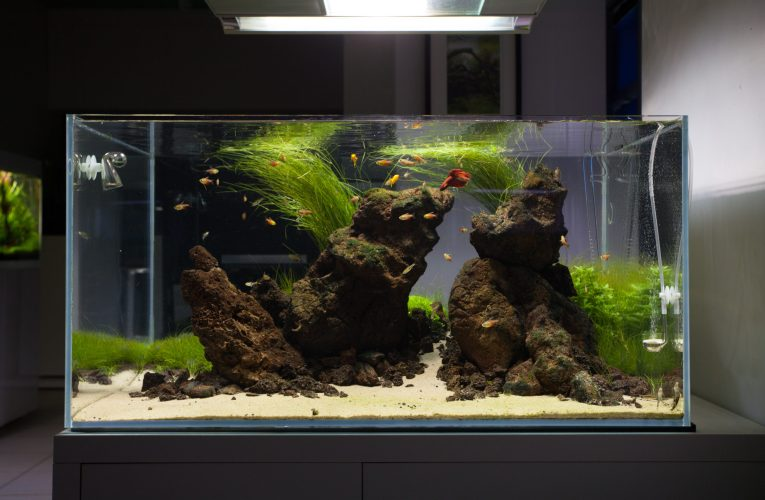 Bacteria – your allies in aquarium maintenance