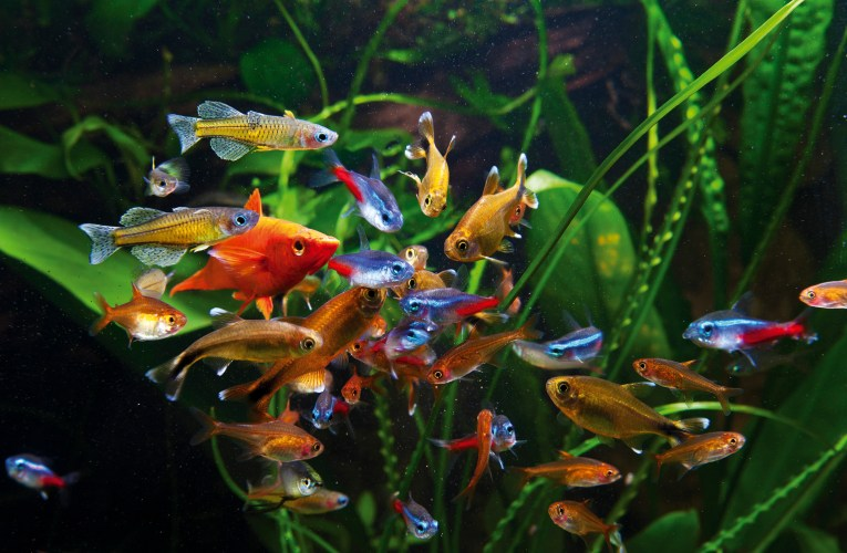 Which fish are best for the first aquarium?