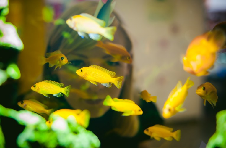 How to choose food for aquarium fish?