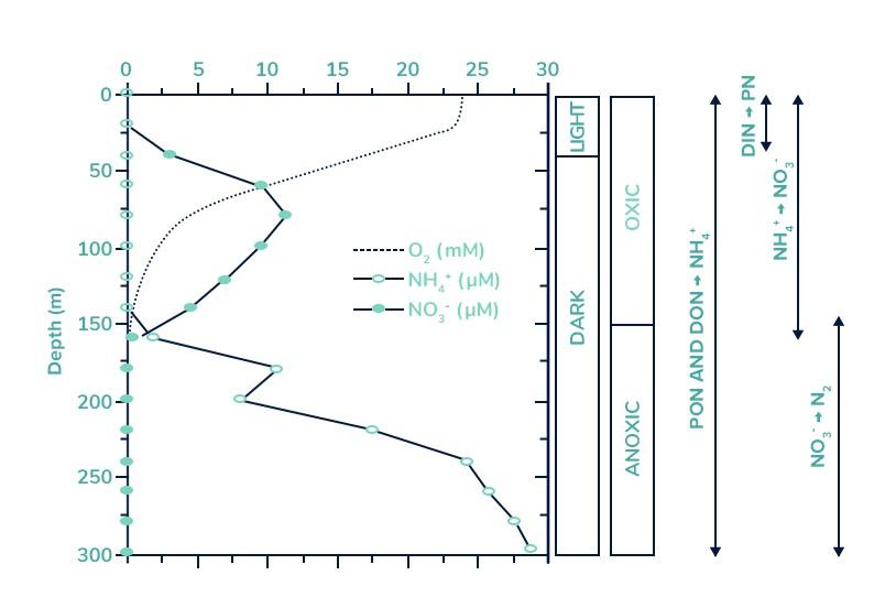 Wykres Tanganika