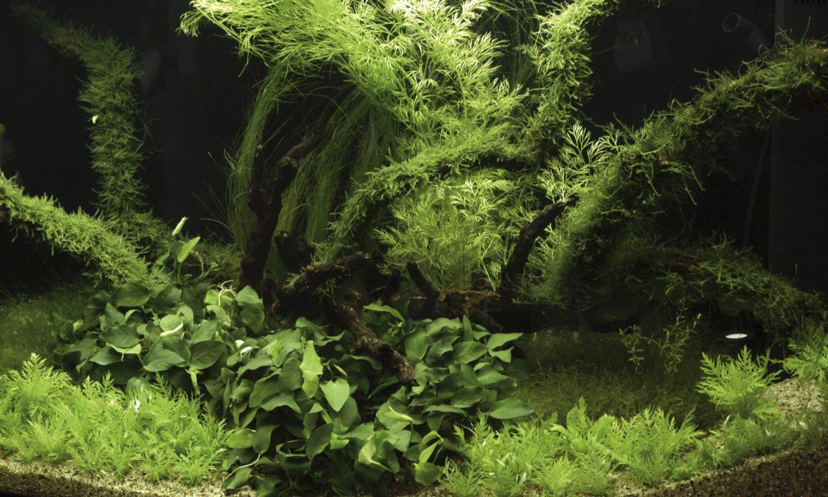 Rośliny w akwarium