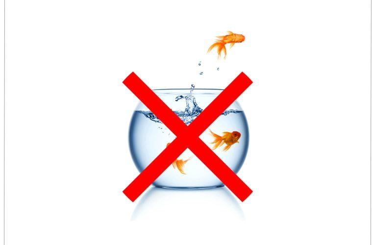 Szklana kula to nie akwarium