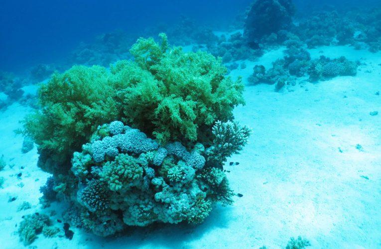 Żywa skała w akwarium morskim – rodzaje i znaczenie