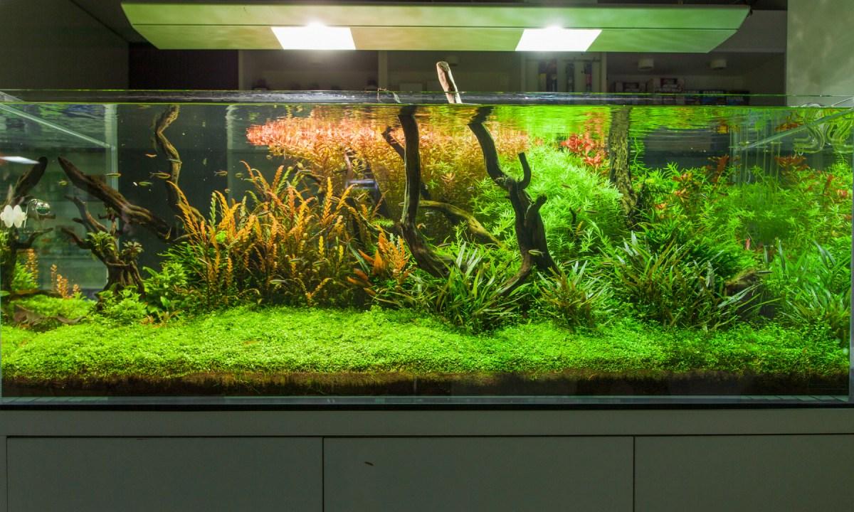 Akwarium roślinne z oświetleniem led