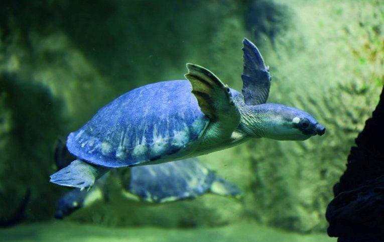 Jak prawidłowo karmić żółwie wodno-lądowe?