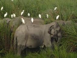 Symbiotic Relationships Tropical Grassland And Savanna