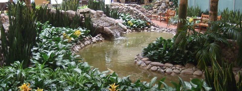 Atrium Interior Plants