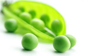 Raw Vegan Pea Protein Powder