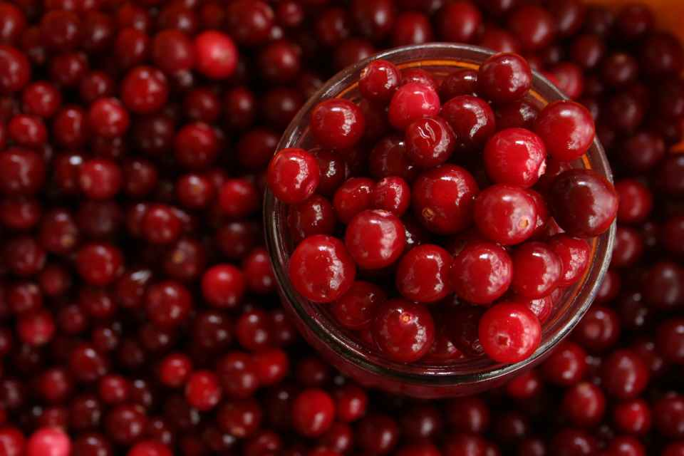 FRESH, CRANBERRIES IN A BOWL COMPLETELY SURROUNDED BY MORE BRIGHT LUCIOUS CRANBERRIES