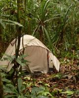 Campsite in a peaty swamp