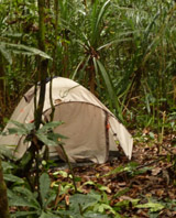 Campsite in a peat swamp forest