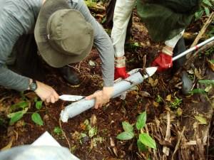 Sampling peat in Peru