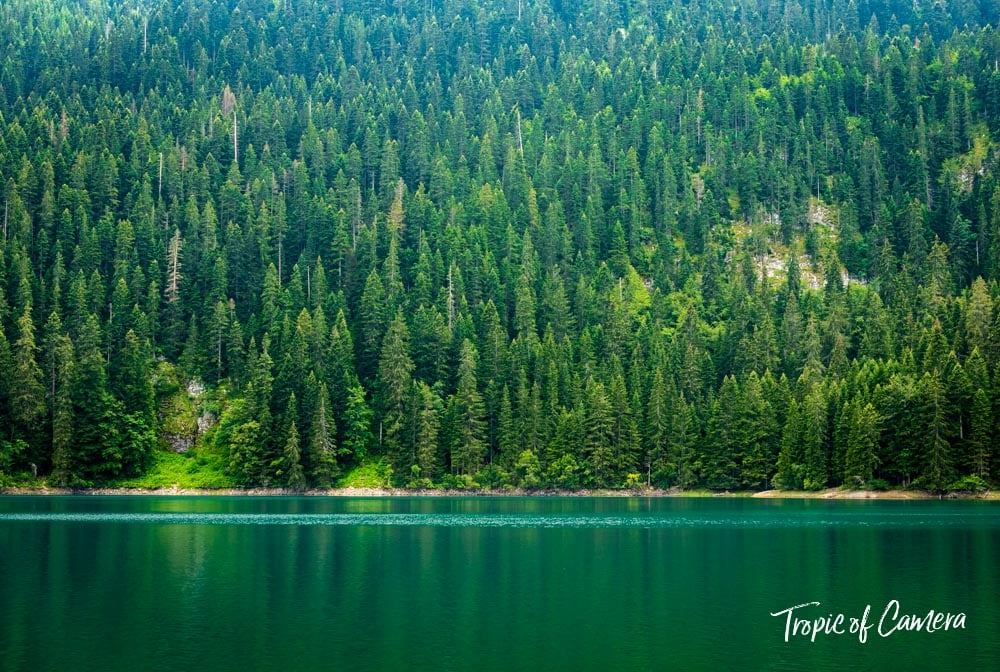 Pine trees reflected in the Black Lake in Durmitor National Park, Montenegro