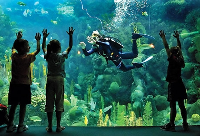 Image result for florida aquarium tampa
