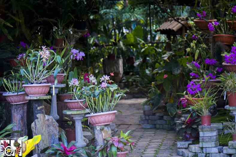 Lankester Botanical Garden shop