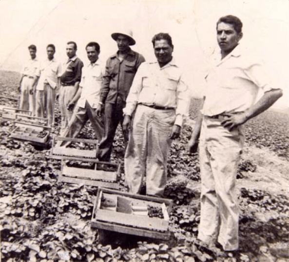 Strawberry pickers on strike