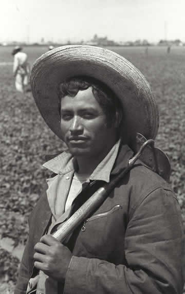A bracero holding a cortito (short-handled hoe) in a California lettuce field, 1956. Photo by Leonard Nadel. Courtesy of National Museum of American History