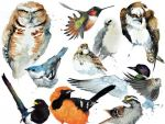 Climate Change May Put Half of North American Birds at Risk of Extinction