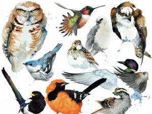 American-Birds